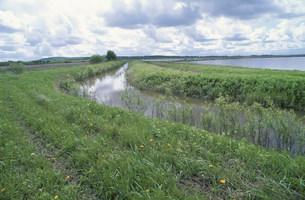 ウスリー湿原の写真素材 [FYI03384837]