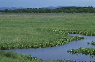 ウスリー湿原の写真素材 [FYI03384883]