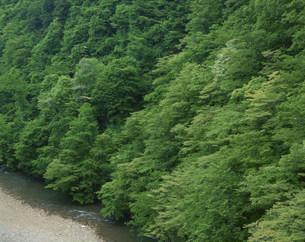 新緑の真湯渓谷の写真素材 [FYI03384889]