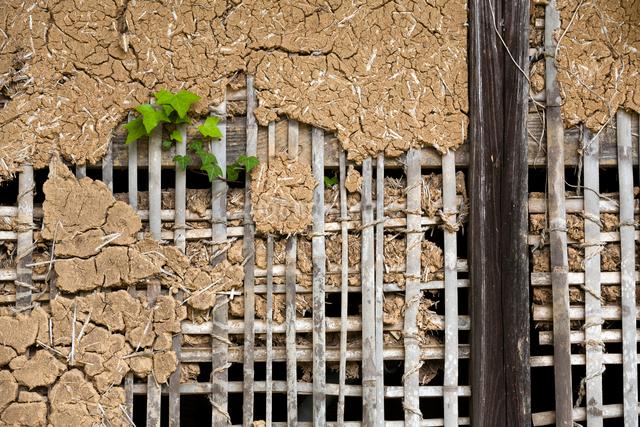 古い土壁と蔦の写真素材 [FYI03385103]