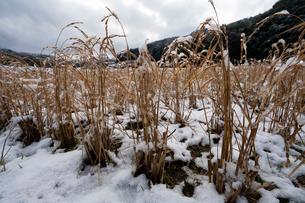 羊田に積もる水雪の写真素材 [FYI03385118]