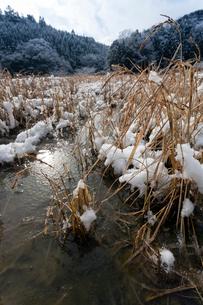 羊田に積もる水雪の写真素材 [FYI03385119]