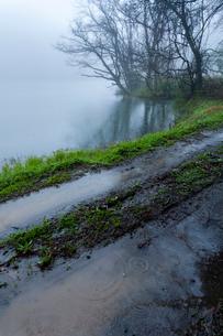 雨霧に霞む沢池と轍の道の写真素材 [FYI03385135]