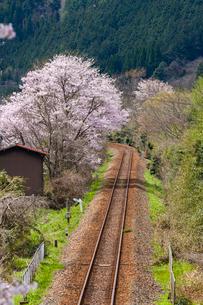 サクラ咲く三江線の写真素材 [FYI03385185]