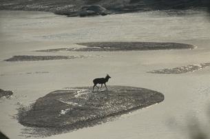 ニャラ ウンフォローズィ動物保護区 ナタール州 南アフリカの写真素材 [FYI03385261]