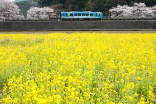 錦川清流線 せせらぎ号 南河内駅と菜の花の写真素材 [FYI03385377]