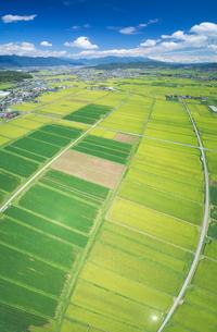 塩田平の田園と大豆畑の俯瞰パノラマと浅間山遠望の写真素材 [FYI03385505]