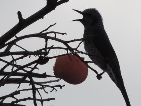 鳥の写真素材 [FYI03385631]