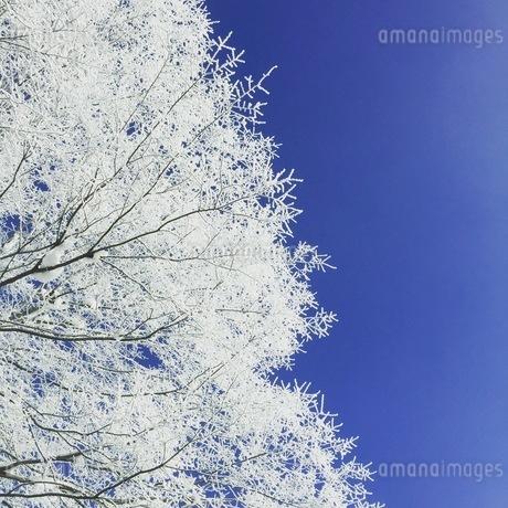 冬空の写真素材 [FYI03385655]