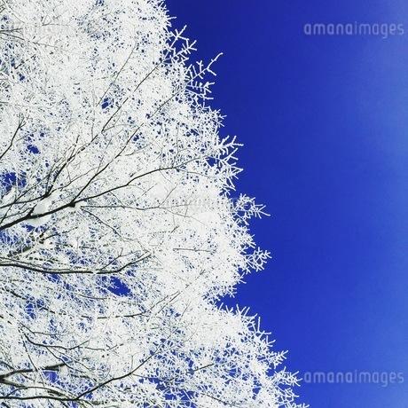 冬空の写真素材 [FYI03385657]