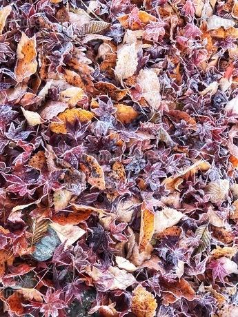 秋の写真素材 [FYI03385940]