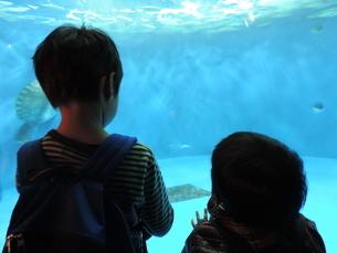 水族館の写真素材 [FYI03385979]