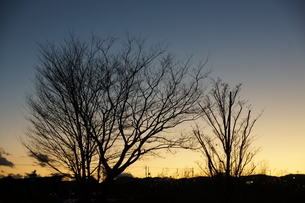 夕暮れと樹木の写真素材 [FYI03385998]