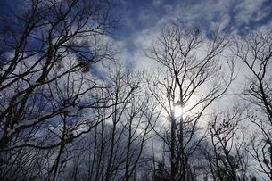 青空と雪の積もった樹木の写真素材 [FYI03386013]
