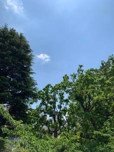 自然・木・いい天気・爽やか・緑の写真素材 [FYI03386061]