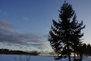 雪原の夕暮れの写真素材 [FYI03386067]