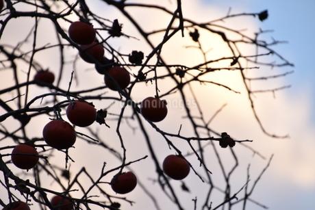 秋の写真素材 [FYI03386079]