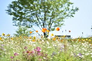 花畑の写真素材 [FYI03386158]