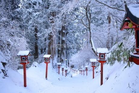 雪道の写真素材 [FYI03386198]