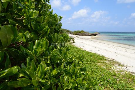 エメラルドグリーンの海と白い砂浜のクサトベラの写真素材 [FYI03386374]