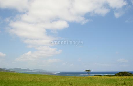 海の見える草原に一本の木の写真素材 [FYI03386375]