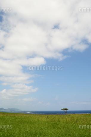 海の見える草原に一本の木の写真素材 [FYI03386376]