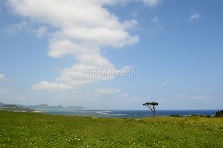 海の見える草原に一本の木の写真素材 [FYI03386386]