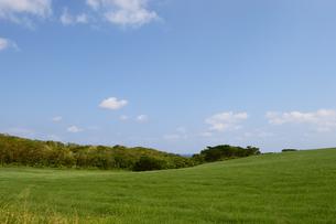 空と緑の草原の写真素材 [FYI03386389]