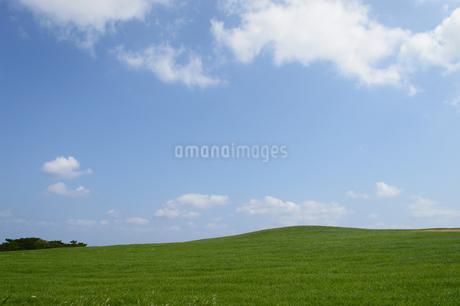 空と緑の草原の写真素材 [FYI03386390]