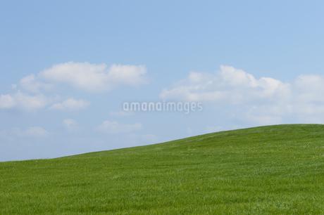 空と緑の草原の写真素材 [FYI03386394]