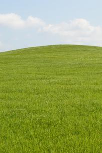 空と緑の草原の写真素材 [FYI03386397]