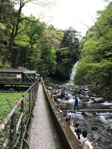 浄蓮の滝 山葵沢 ますづりの写真素材 [FYI03386411]