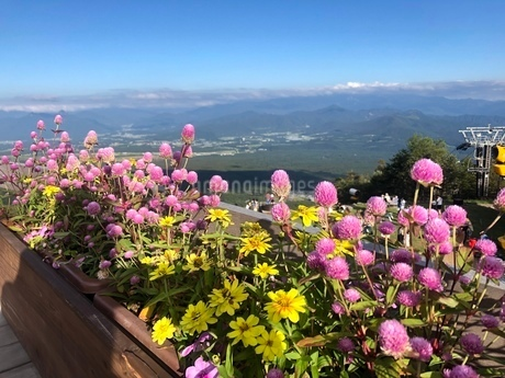標高1500mで咲く花の写真素材 [FYI03386482]