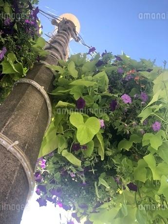 下から見た草花の写真素材 [FYI03386495]