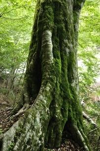 大木の写真素材 [FYI03386536]