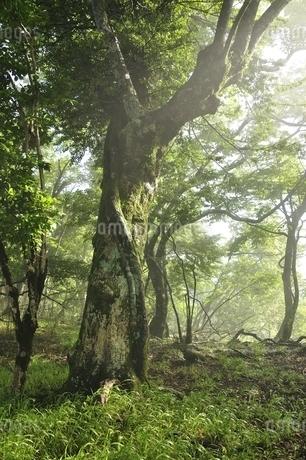 丹沢の森の写真素材 [FYI03386540]