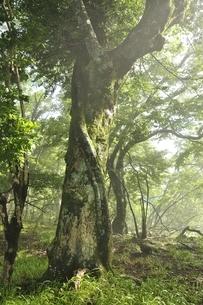 丹沢の森の写真素材 [FYI03386541]