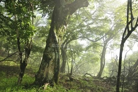 丹沢の森の写真素材 [FYI03386542]