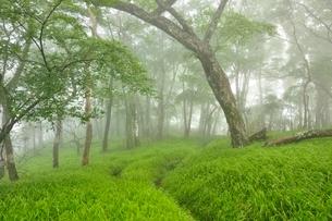 丹沢 山霧の森の写真素材 [FYI03386545]
