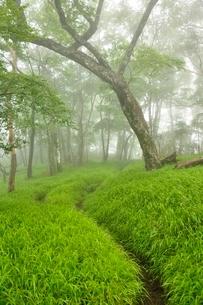 丹沢 山霧の森の写真素材 [FYI03386546]