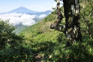 大室山から望む夏の富士山の写真素材 [FYI03386551]