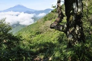 大室山から望む夏の富士山の写真素材 [FYI03386552]