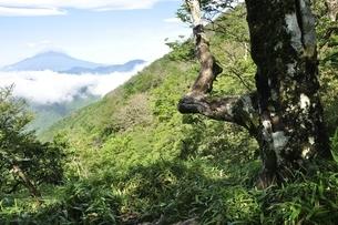 大室山から望む夏の富士山の写真素材 [FYI03386562]
