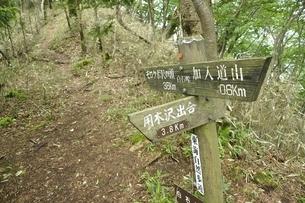 丹沢の道 白石峠の写真素材 [FYI03386637]