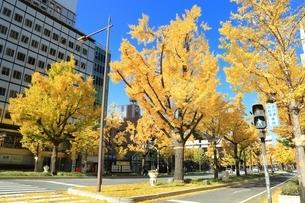 秋の御堂筋の写真素材 [FYI03386825]