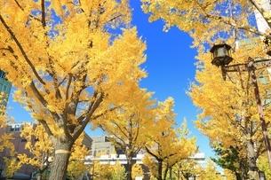 秋の御堂筋の写真素材 [FYI03386826]