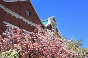 大阪造幣局の桜の写真素材 [FYI03386830]