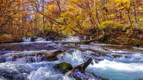 奥入瀬渓流の鮮やかな紅葉の写真素材 [FYI03386912]