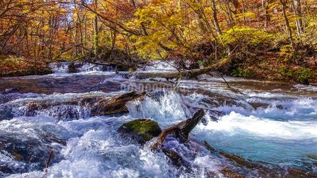 奥入瀬渓流の清流と紅葉の写真素材 [FYI03386913]