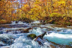 奥入瀬渓流の清流と紅葉の写真素材 [FYI03386915]